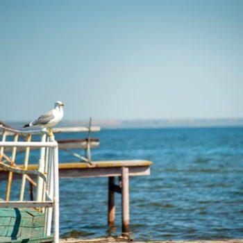 photo mouette sur bord de mer