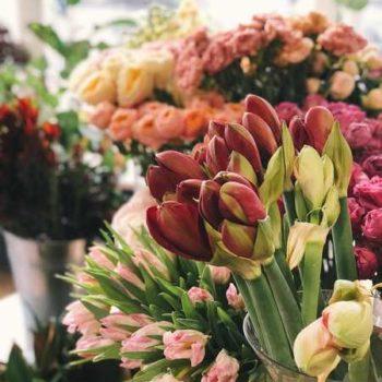photo fleur fleuriste