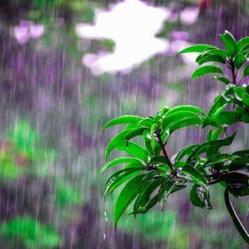 photo pluei branche d'arbre