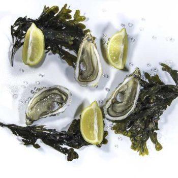 photo huitres citron et algues