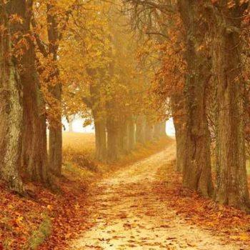 photo chemin d'arbre feuille automne